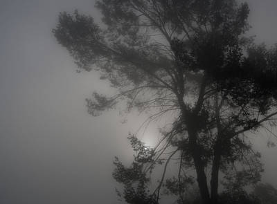 Photograph - Misty Morning by Guillermo Rodriguez