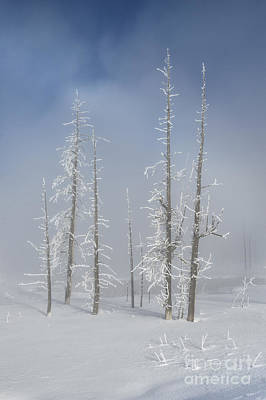 Photograph - Misty Morning In Yellowstone National Park by Sandra Bronstein
