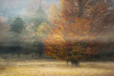 Misty Morning Maple Print by Joseph Rossbach
