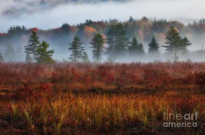 Misty Morning Meadow I - Cranberry Wilderness Art Print
