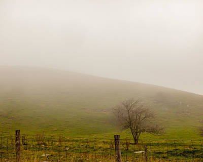 Photograph - Misty Morning by Melinda Ledsome