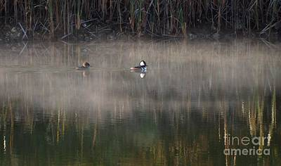 Photograph - Misty Morning Mergansers by Amy Porter
