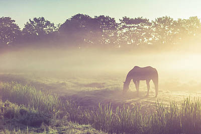 Photograph - Misty Morning On The Dutch Field by Jenny Rainbow
