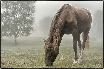 Misty Morning Art Print by Peter Lindsay