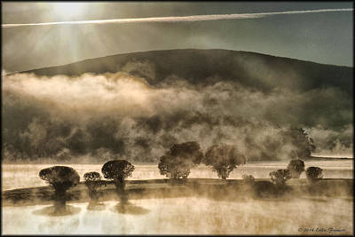 Photograph - Misty Morning Silhouette by Erika Fawcett