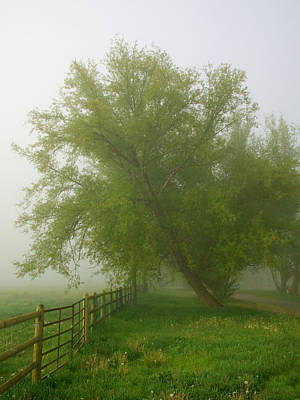 Photograph - Misty Morning by TL  Mair