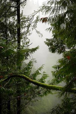 Photograph - Misty Mossy Morning by Lisa Knechtel