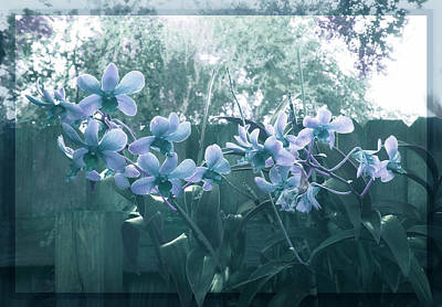 Photograph - Misty Orchids In Blue by Ginny Schmidt