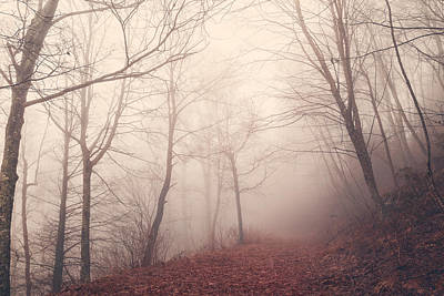 Photograph - Misty Path by Maria Robinson