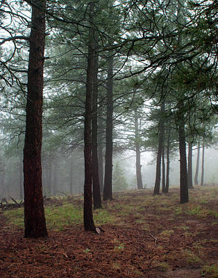 Misty Pines In Colorado Print by Julie Magers Soulen
