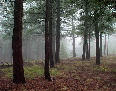 Photograph - Misty Pines Landscape In Colorado by Julie Magers Soulen