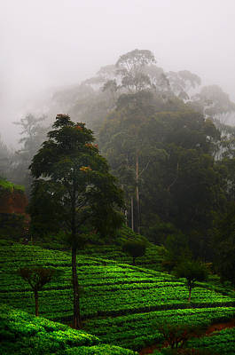 Photograph - Misty Tea Plantations In Nuwara Eliya  by Jenny Rainbow