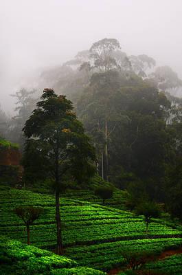 Misty Tea Plantations In Nuwara Eliya  Art Print by Jenny Rainbow