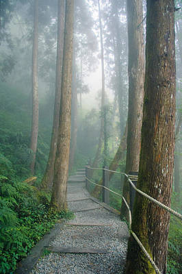Photograph - Misty Trail by Shuwen Wu
