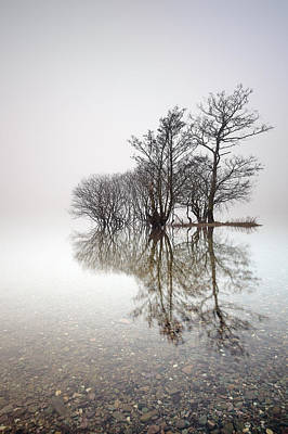 Milarrochy Bay Photograph - Misty Trees by Grant Glendinning