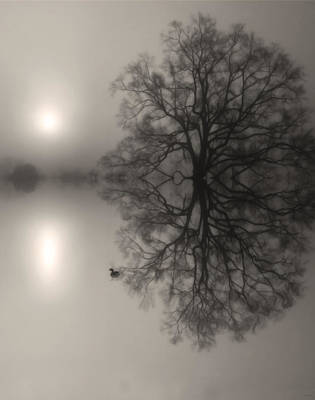 Photograph - Misty Water Oak by Deborah Smith