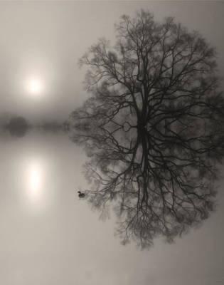 Misty Water Oak Art Print