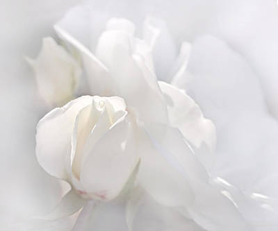 Photograph - Misty White Roses by Jennie Marie Schell