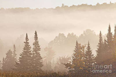 Photograph - Misty Woodland Sunrise by Alan L Graham