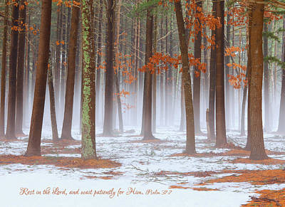 Photograph - Misty Woods by June Jacobsen