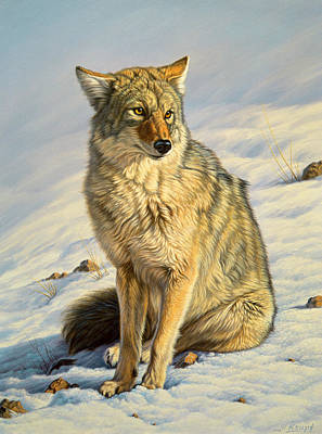 Coyote Painting - Misunderstood by Paul Krapf