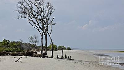 Photograph - Mitchelville Beach by Carol  Bradley