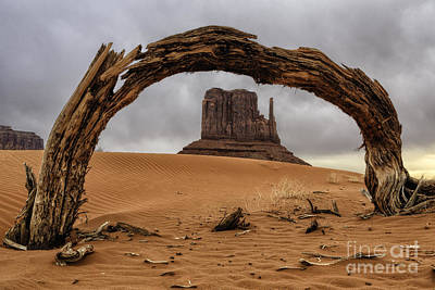 Photograph - Mitten And Juniper Arch by Stuart Gordon