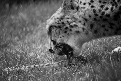 Photograph - Mittens2 by Darren Langlois