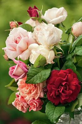 Cut Flowers Photograph - Mixed Bouquet Of Roses (rosa Hybrid) by Maria Mosolova