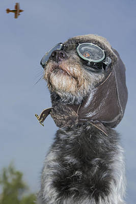 Contradiction Photograph - Mixed Breed Dog Dressed In Leather Cap by Darwin Wiggett