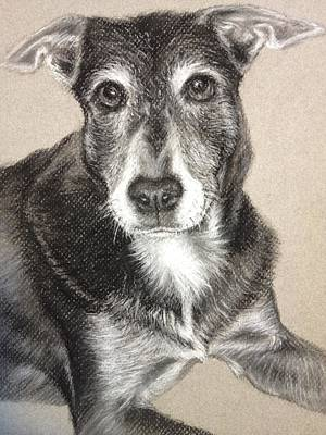 Commission Work Drawing - Mixed Breed Dog  by Sun Sohovich