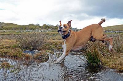 Water Play Photograph - Mixed Breed Enjoying Sierra De Gredos by Nano Calvo