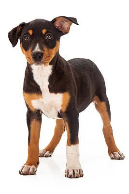 Mixed Breed Puppy Ear Up Art Print
