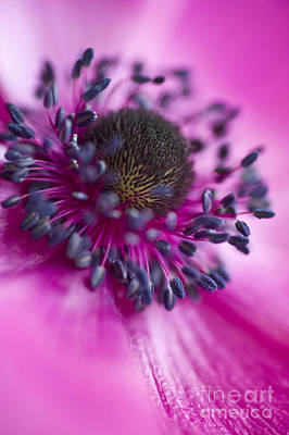 Stamen Photograph - Mixed Emotions by Jan Bickerton