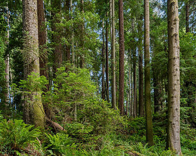 Photograph - Mixed Forest by Greg Nyquist