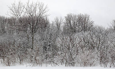 Photograph - Mixed Forest In Winter. by Rob Huntley