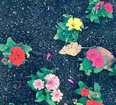 Photograph - Mixed Garden - Edit by Alohi Fujimoto