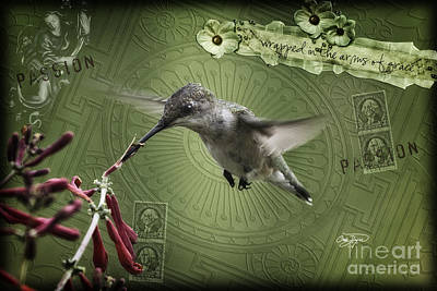 Photograph - Mixed Media Hummingbird Art Collection Image One by Cris Hayes