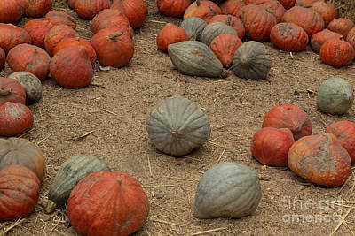 Photograph - Mixed Pumpkins by Suzanne Luft