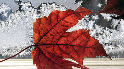 Photograph - Mixed Seasons by Andre Paquin