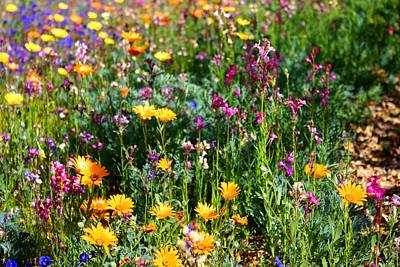 Photograph - Mixed Wildflowers by Kathryn Meyer