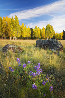 Peter James Nature Photograph - Mixing Seasons by Peter Coskun