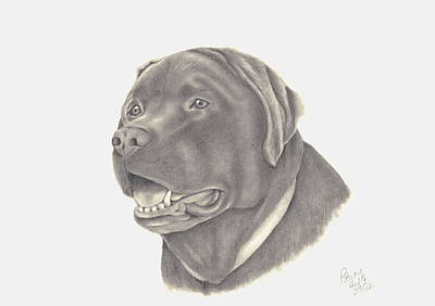 Chocolate Lab Drawing - Mocha by Patricia Hiltz
