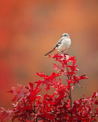 Mockingbird Autumn Art Print