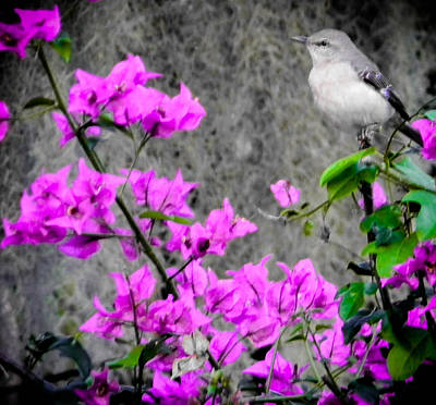 Photograph - Mockingbird by Christy Usilton