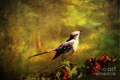 Animals Digital Art - MOCKINGBIRD Have You Heard... by Lianne Schneider