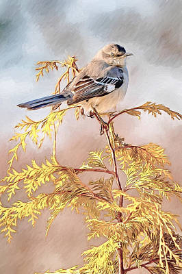 Asheville Mixed Media - Mockingbird by John Haldane