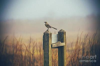 Mockingbird Wall Art - Photograph - Mockingbird by Katya Horner