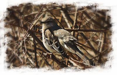 Photograph - Mockingbird by Marcia Lee Jones