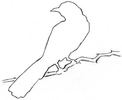 Mockingbird Drawing - Mockingbird by Pam Ferrara